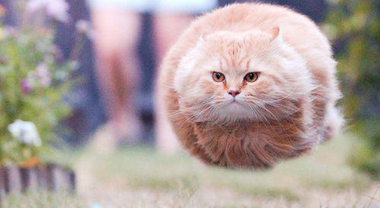おれんちのネコwwwwwwww ネット猫派「サワサワモフモフしたいでごさりまする」