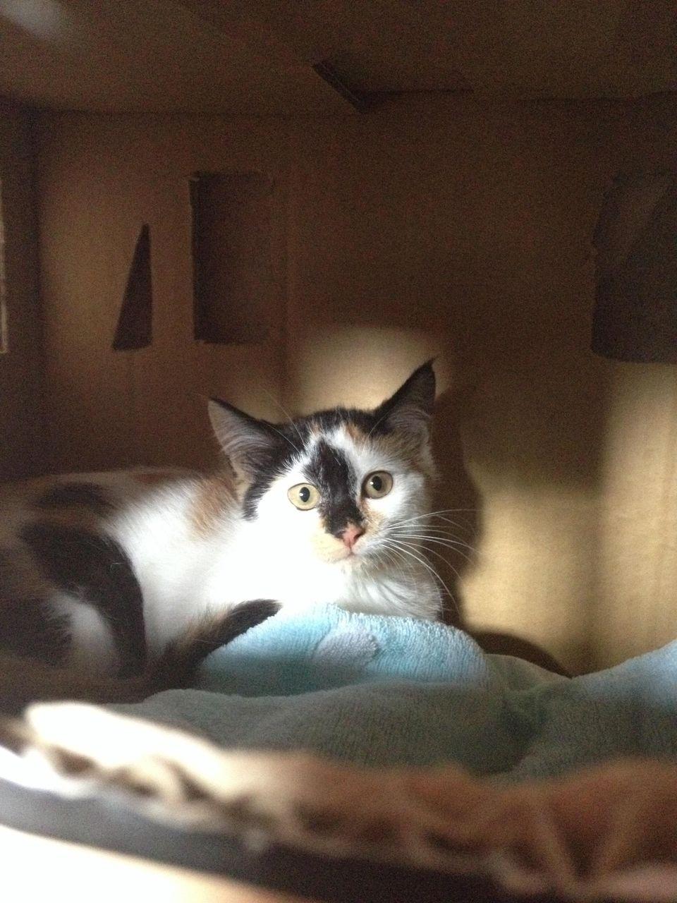 http://livedoor.blogimg.jp/akan2ch/imgs/a/4/a4036a0d.jpg