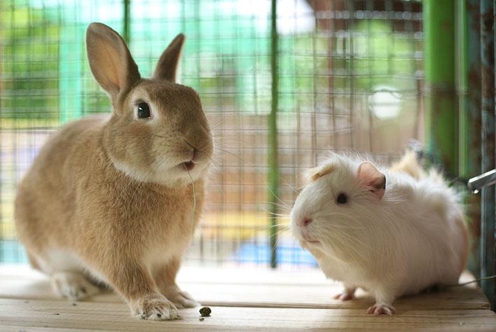 両耳が切り取られたウサギが発見され捜査へ 千葉・船橋