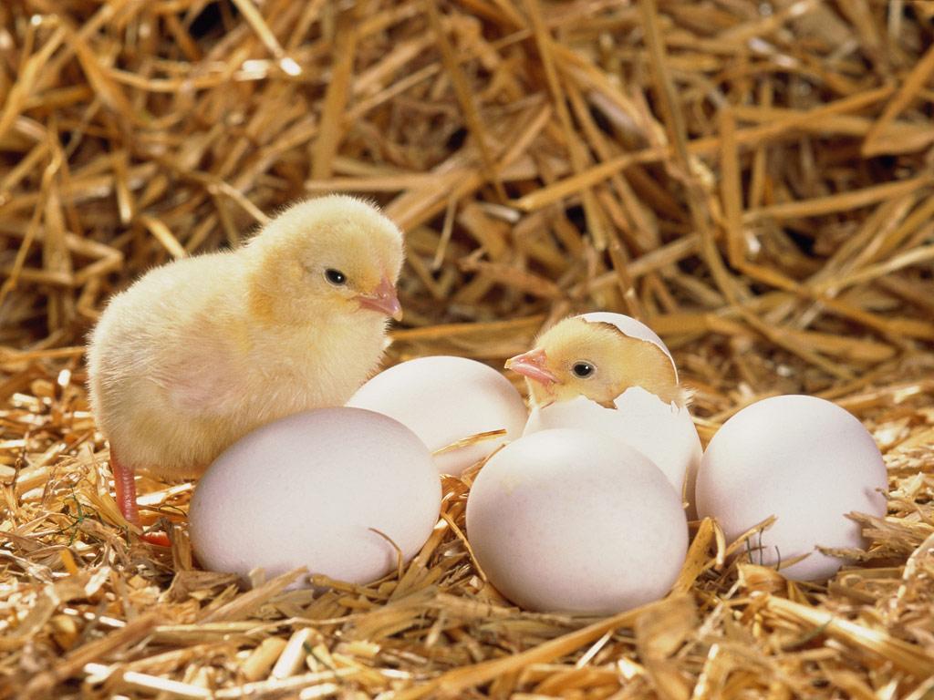 【もったいないなぁ 】 30個もの生卵を投げつけた無職少年らを逮捕 ネット識者「卵は腐らせて投げるんだよ」