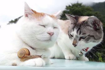 【動画】ネコの手に乗るカタツムリが話題にwww