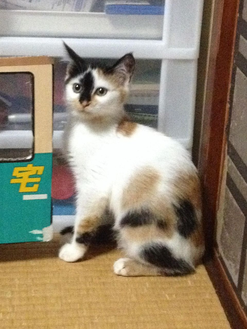 http://livedoor.blogimg.jp/akan2ch/imgs/b/f/bf6be327.jpg
