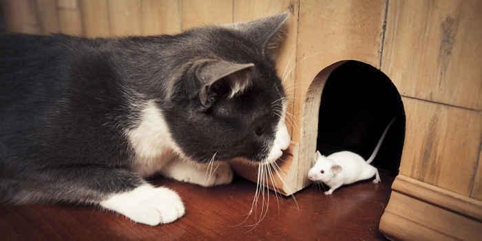 【ぬこ画像】 猫を飼ってない奴ちょっと来い、自慢してやんよwwwwwwww ネット識者「猫飼ってるけど自慢してくれ」