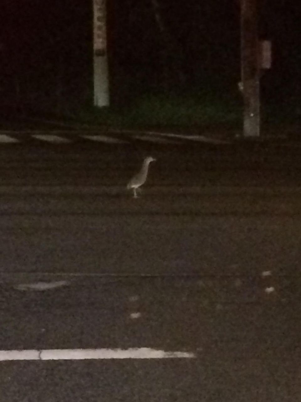 なんか変な鳥発見したwwwwwwwwwwwwww