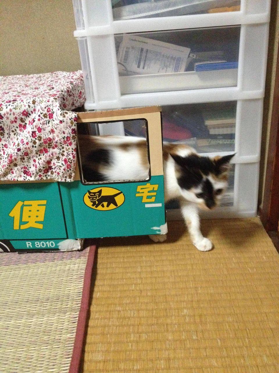 http://livedoor.blogimg.jp/akan2ch/imgs/d/3/d3280752.jpg
