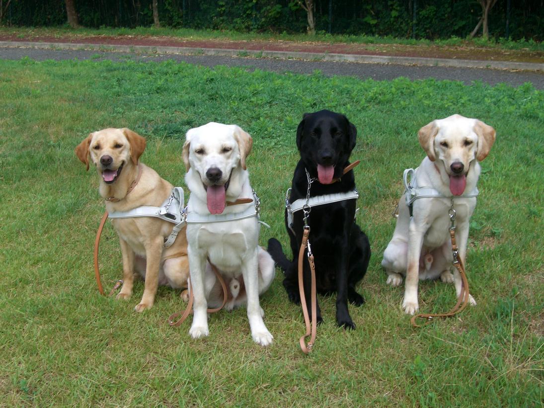 視覚障害者と盲導犬、バックしていたダンプに轢かれ死亡。死角ってこわいな…