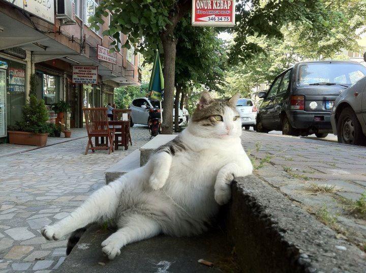 【哀愁】オッサンみたいなネコが話題に【虚脱】