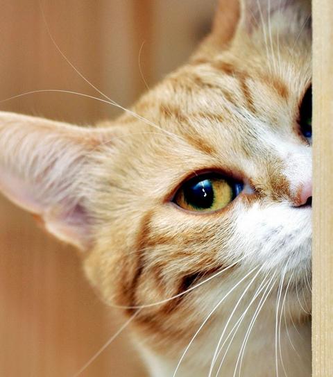 ネコがいるせいでオナニー出来ねえwwww