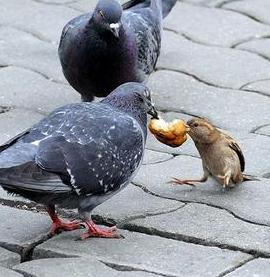 ベランダに雀の子供がいるんだけど