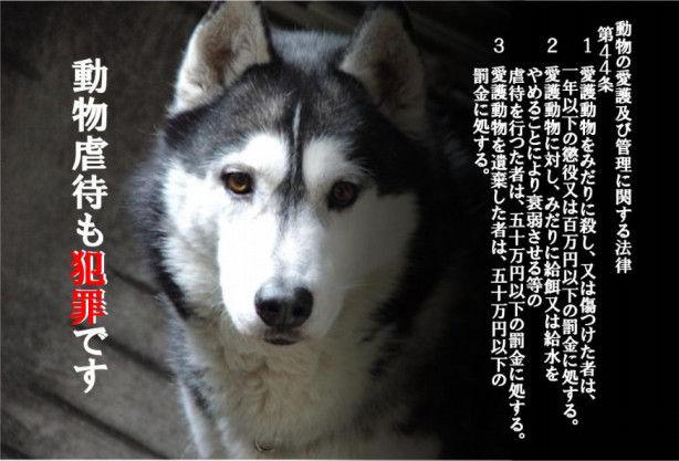 【炎上】ペットホテルが動物虐待!元従業員がブログで暴露→アメブロ運営が強制削除→東京都が調査開始