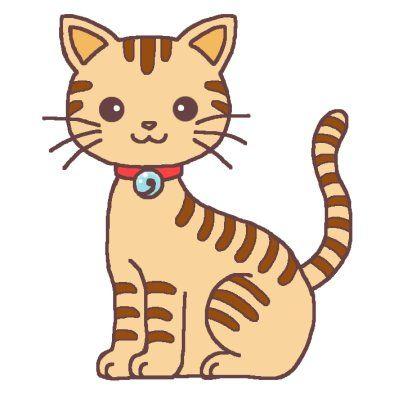 うちの猫の画像貼るから感想を一行で簡潔にどうぞどうぞ