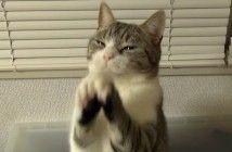 【あざとい】飼い主が帰ってきてピョンピョン飛び跳ねて喜ぶ子ネコ