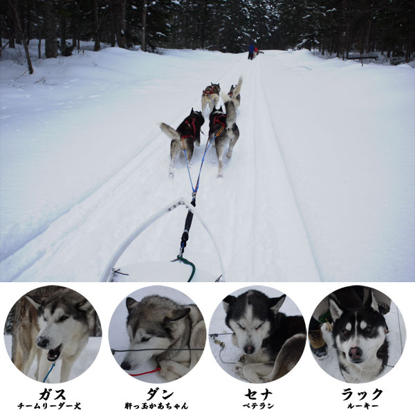 dogsled1_4