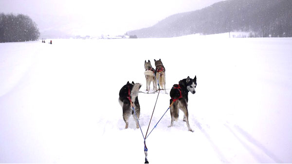 dogsled1_9