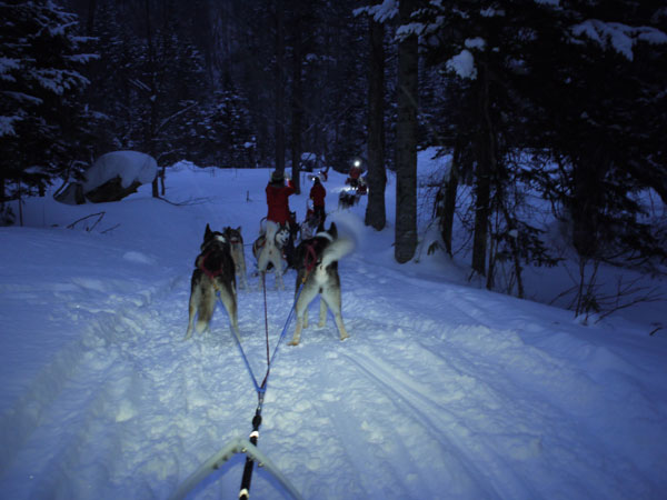 dogsled6
