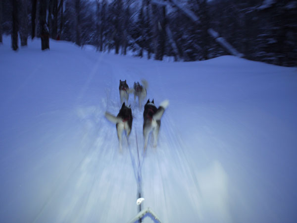 dogsled5