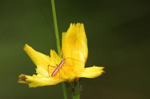 虫と虫DSC_420989__00001