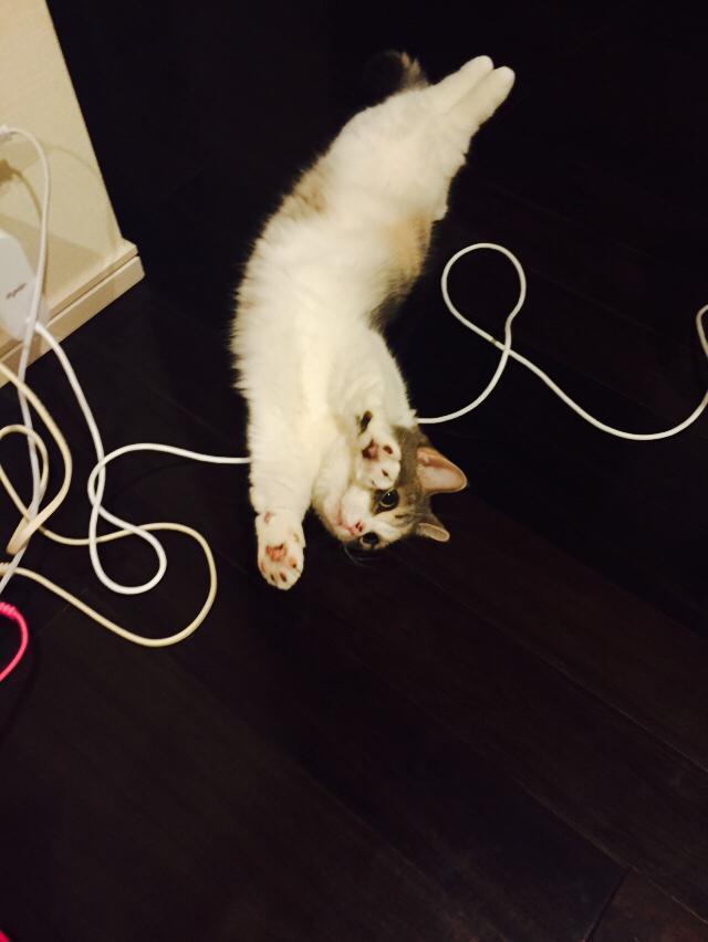 【AKB48】高橋みなみ総監督が飼ってる猫!!可愛すぎww【たかみな/にゃーちゃん】
