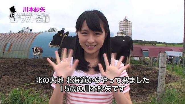 sayaya_cow