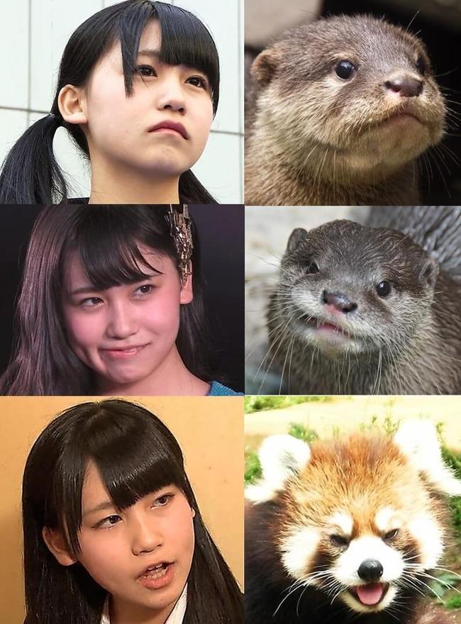 kojimako_hikaku