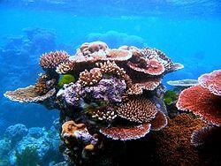 250px-Coral_Outcrop_Flynn_Reef