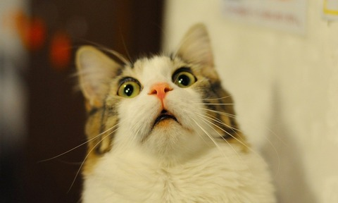 3062605_surprised-cat-1000x600