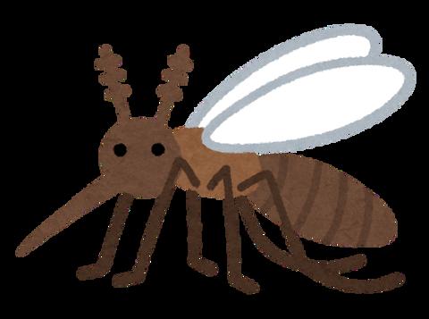 bug_ka4_seichu