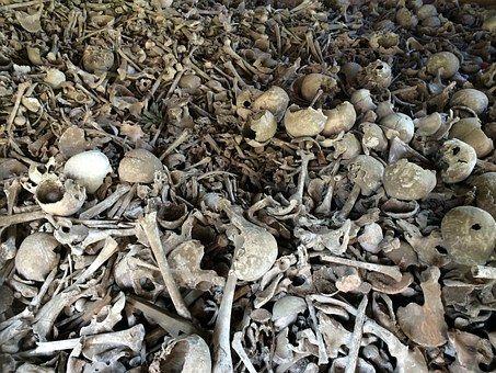 bone-664596__340