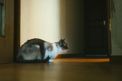 cat9302344_TP_V