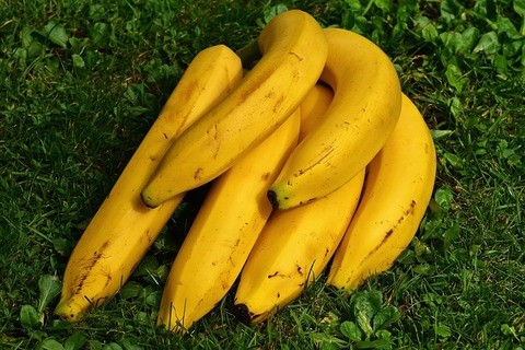 bananas-1642706_640