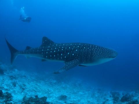 Maldives-P8290304_TP_V4