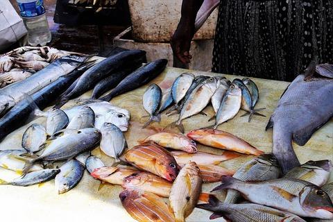 【狂気】韓国の養殖業者、日本産活魚にシェアを奪われ怒りのパフォーマンス!!!(動画あり)