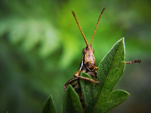 insect-3971001_640