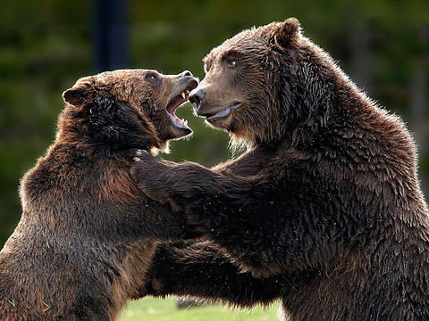Wild-Animals-Fights-5