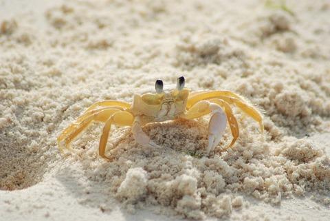 crab-215170_640