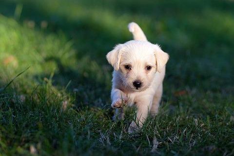 【奇跡】6本足の犬が生まれ話題に……!!!→ ご覧ください画像あり