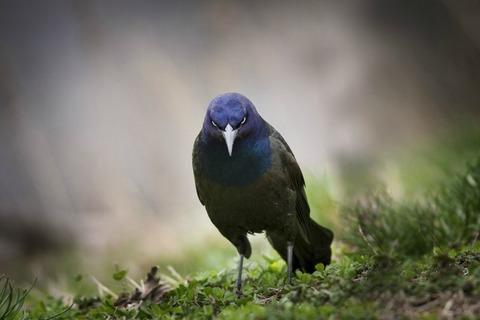 a-brutal-raven