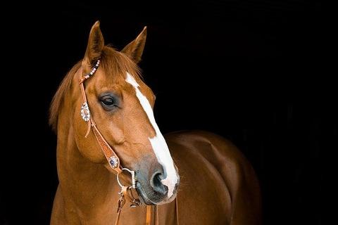 horse-3390256_640