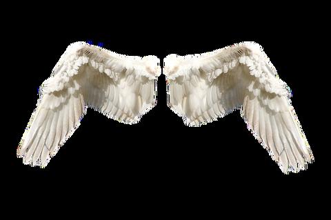 wings-474114_640