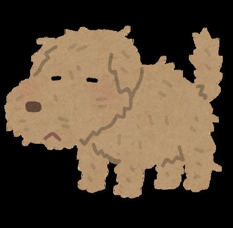 pet_dog_boroboro