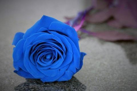 blue-rose-on-grave-4759357_640
