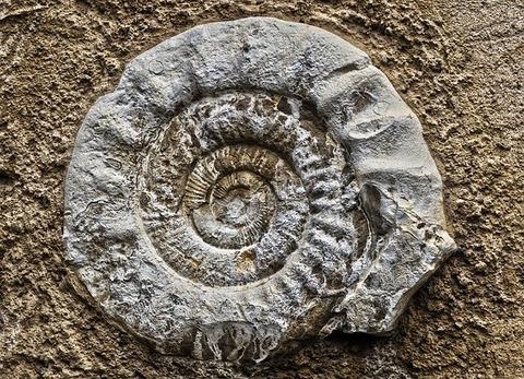 ammonit-3235509_640