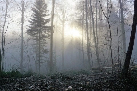 forest-1929953_640