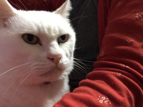 【仰天】北大路欣也にソックリな猫さんの目ヂカラがすごいwwwwwww (写真あり)