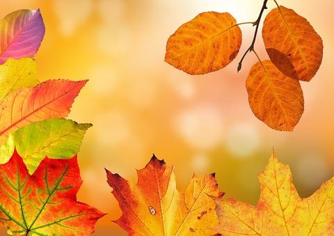 autumn-1649362_640