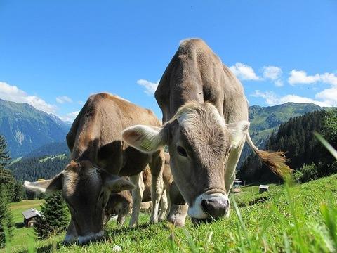 【衝撃】400頭の牛さんが失血死→ その状況が壮絶すぎる……