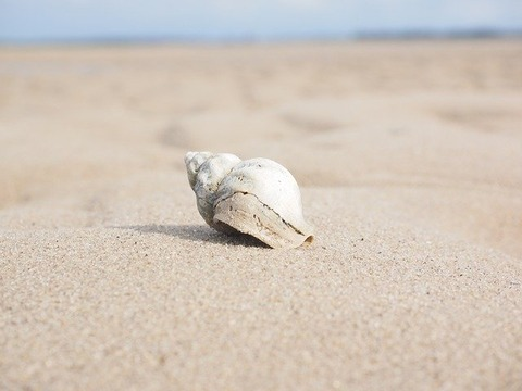 【朗報】俺たちのグレタ、貝になるwwwwwwww