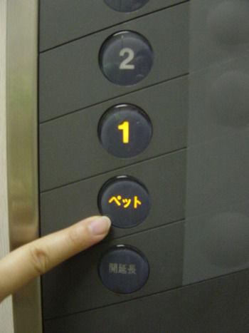 ペットボタン
