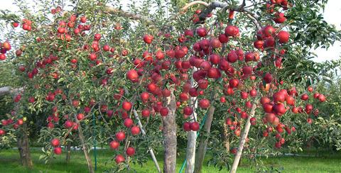 top_img_apple