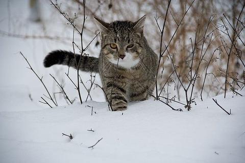 cat-188088_640
